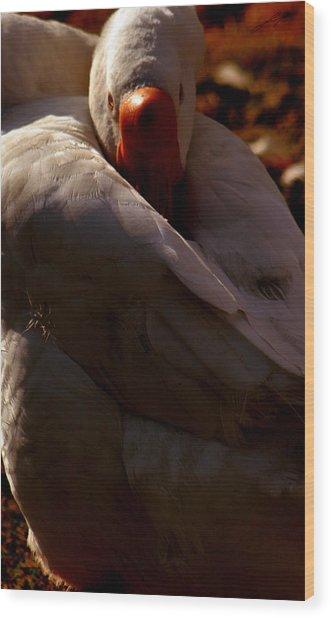 Sleeping Swan Wood Print by LoungeMode Productions