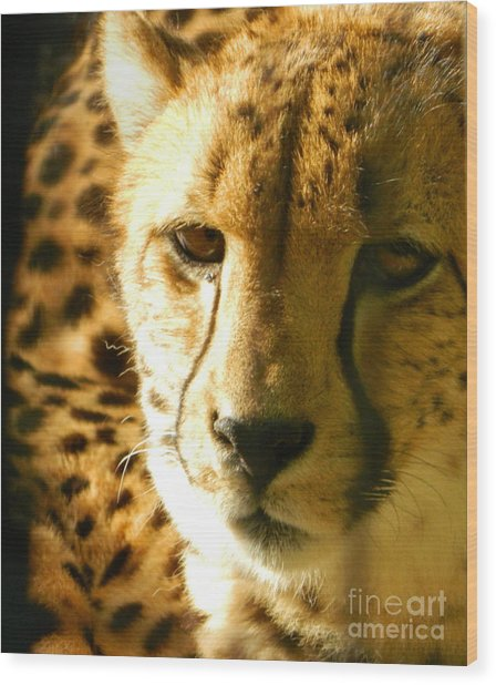 Sleepy Cheetah Cub Wood Print