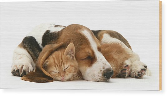 Sleepy Ginger Pals Wood Print