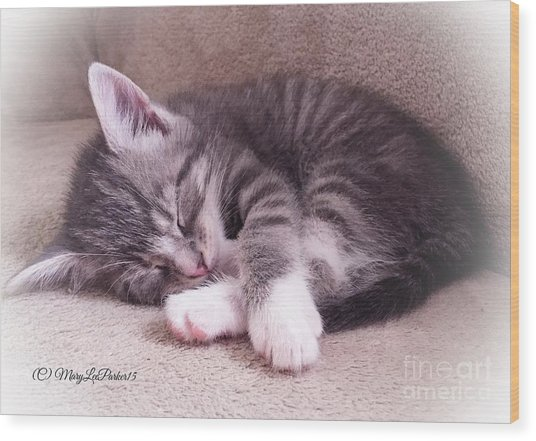 Sleepy Kitten Bymaryleeparker Wood Print