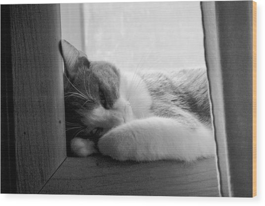 Sleepy Kitty Wood Print