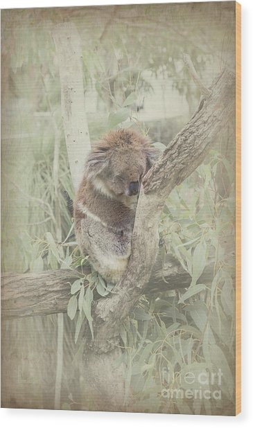 Sleepy Koala Wood Print