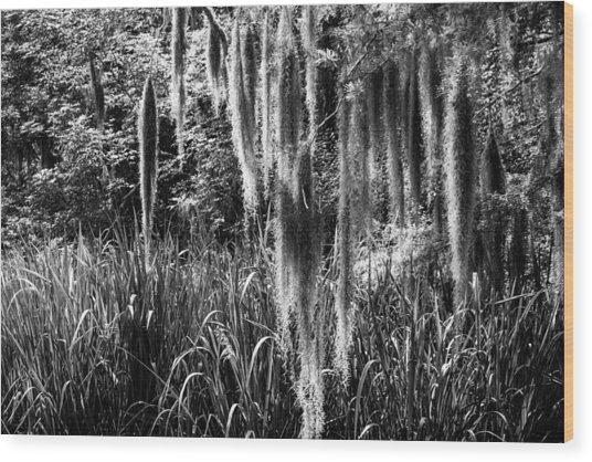Slidell Spanish Moss Wood Print