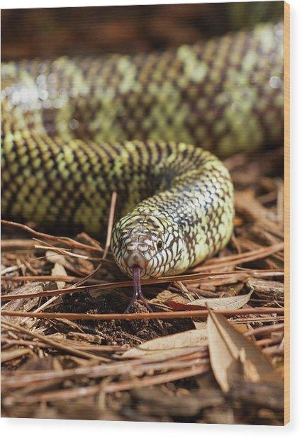 Slither Snake Wood Print