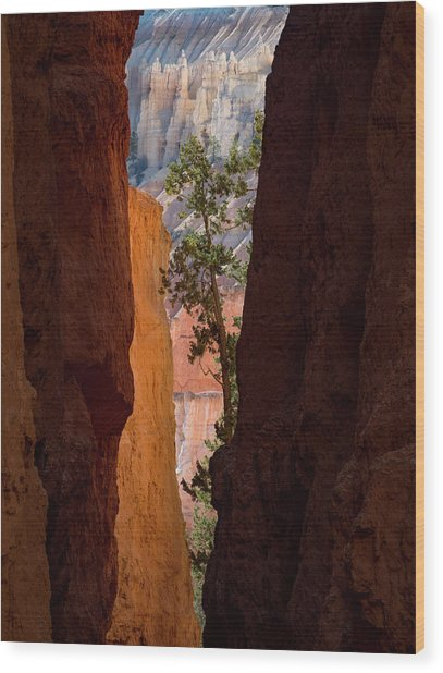 Sliver Of Bryce Wood Print