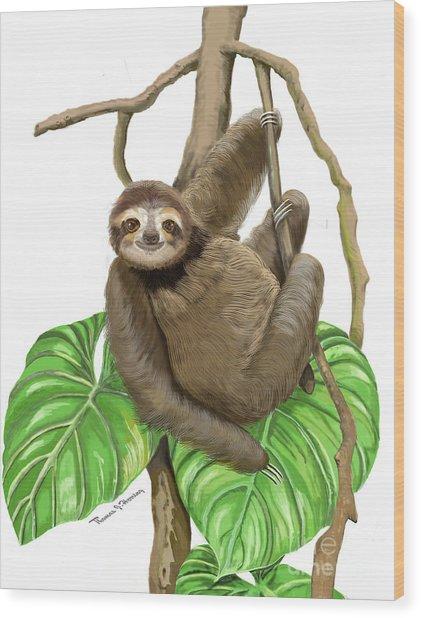 Hanging Three Toe Sloth  Wood Print