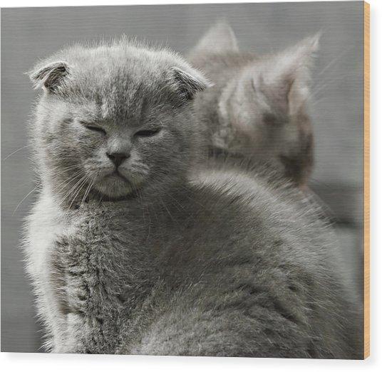 Slumbering Cat Wood Print