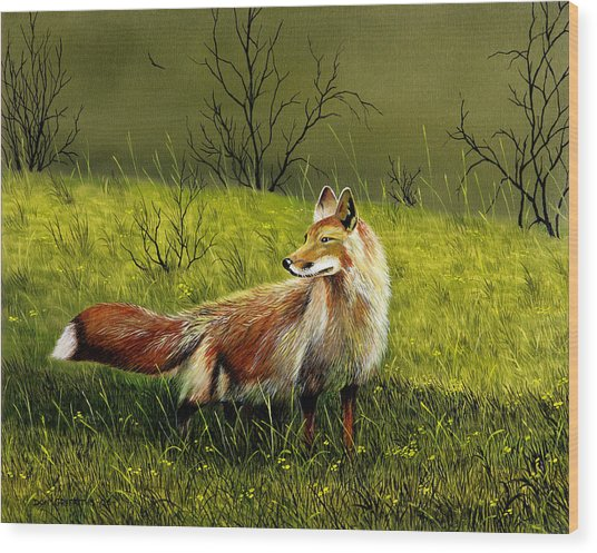 Sly Fox Wood Print by Don Griffiths