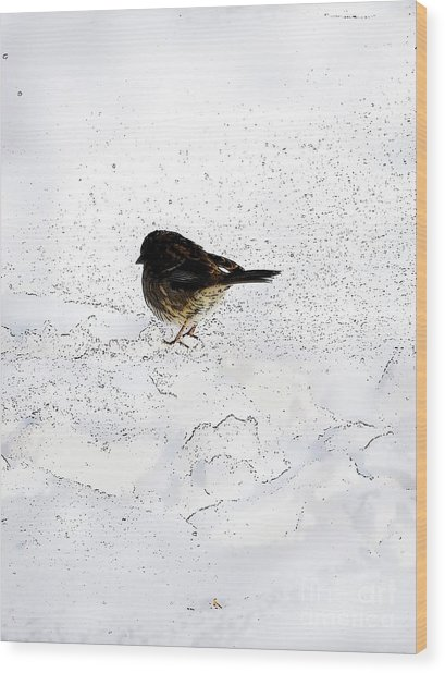 Small Bird On Snow Wood Print