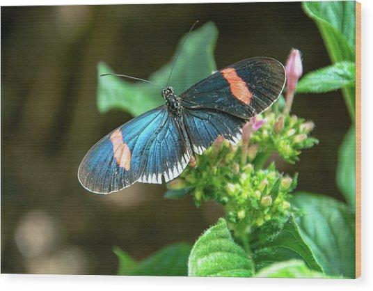 Small Black Postman Butterfly Wood Print