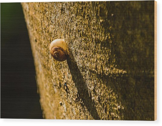 Small Snail On The Tree Wood Print