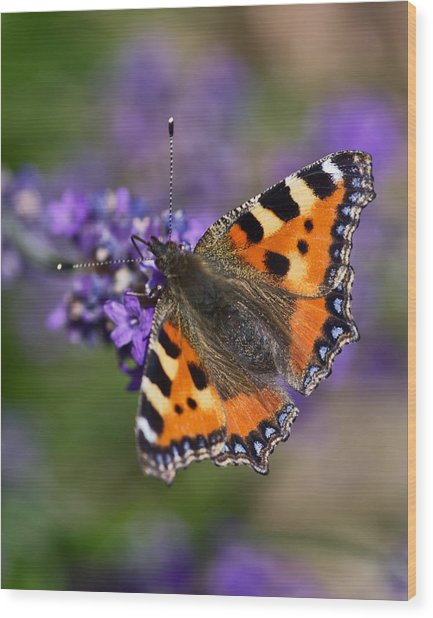 Small Tortoiseshell Wood Print