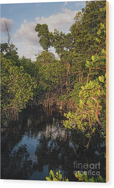 Small Waterway In Vitolo Preserve, Hutchinson Isl  -29151 Wood Print
