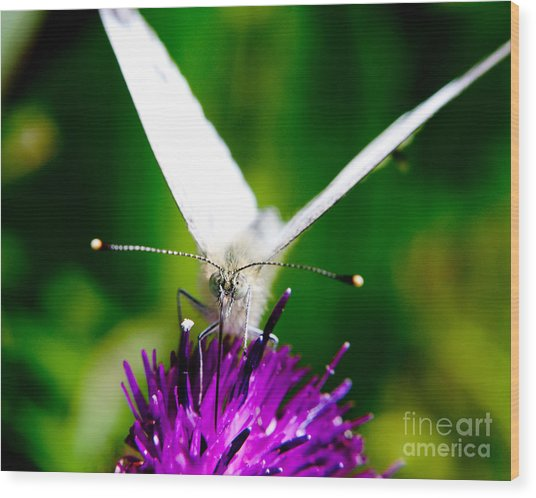 Small  White Cabbage Butterfly Pieris Rapae Wood Print by Chris Smith