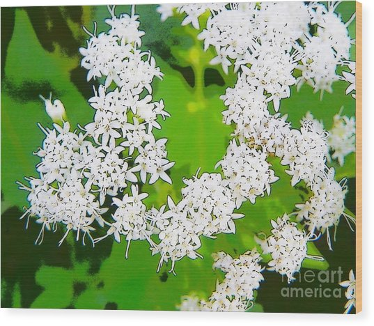 Small White Flowers Wood Print