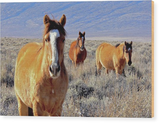 Smile - Mustang Mares Of Eastern Sierra  Wood Print