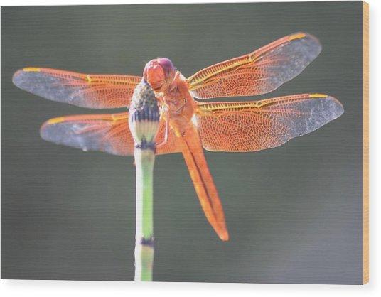 Smiling Dragonfly Wood Print by Melanie Beasley