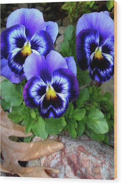 Smiling Faces Of Spring Wood Print