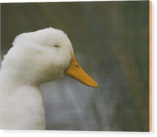 Smiling Pekin Duck Wood Print