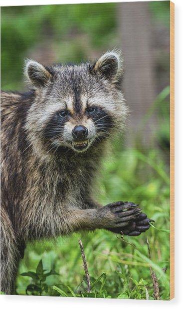 Smiling Raccoon Wood Print