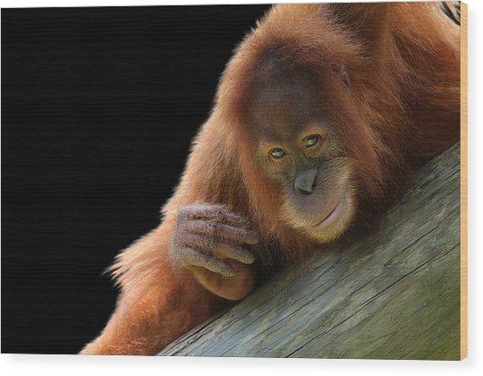 Cute Young Orangutan Wood Print