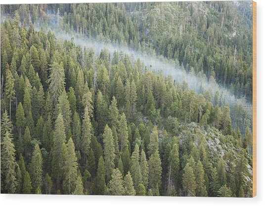 Smoke In Forest Wood Print by Rick Pham