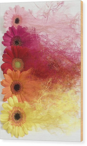 Smoke Splattered Gerbera Daisies Wood Print