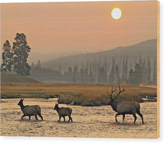 Wood Print featuring the photograph Smokey Elk Crossing by Wesley Aston