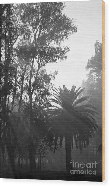 Smoky Morning Trees Wood Print