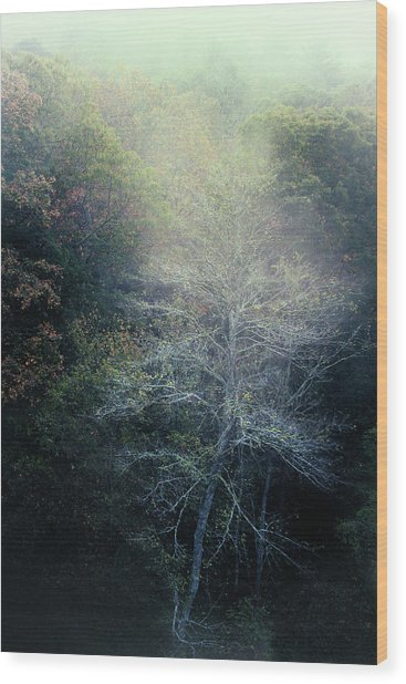 Smoky Mountain Trees Wood Print