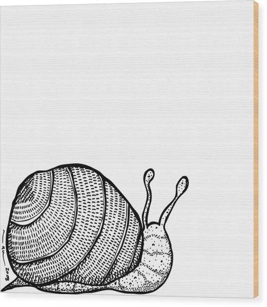 Snail Wood Print by Karl Addison