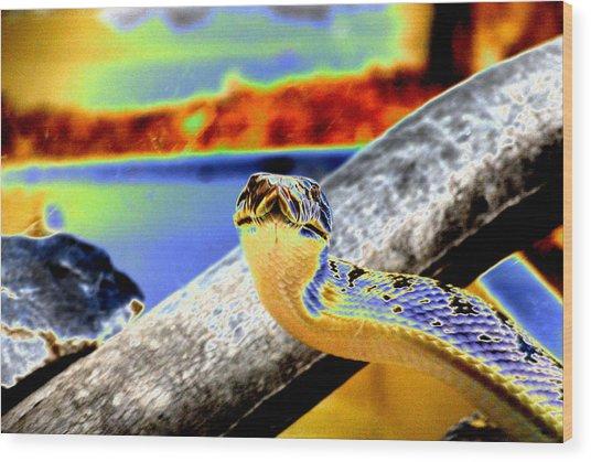 Snake Eyes Wood Print by Peter  McIntosh