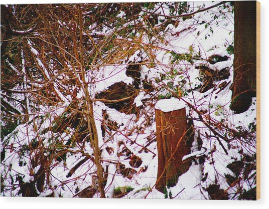 Snow And Tree Trunk Wood Print by Paul Kloschinsky