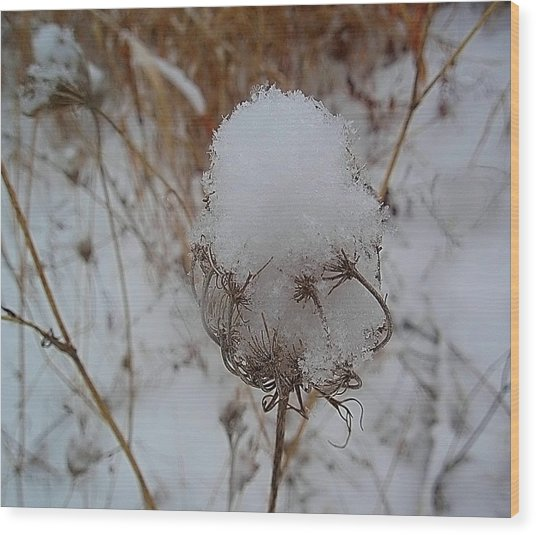 Snow Anne's Lace Wood Print