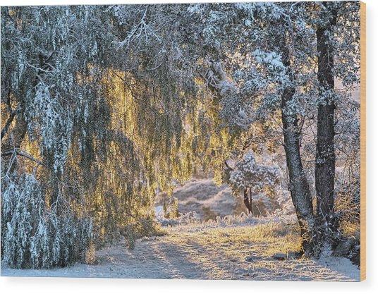 Snow At Sunrise 4 Wood Print