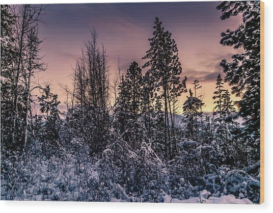Snow Covered Pine Trees Wood Print