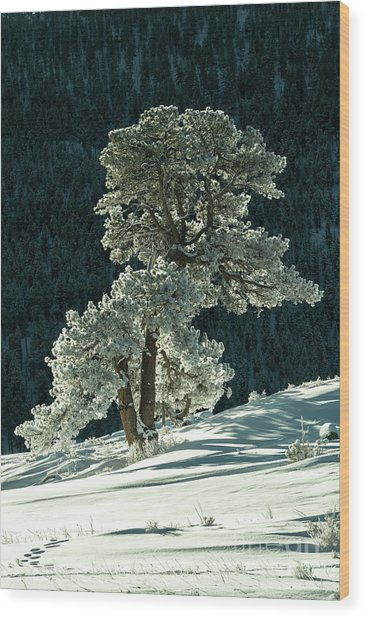 Snow Covered Tree - 9182 Wood Print