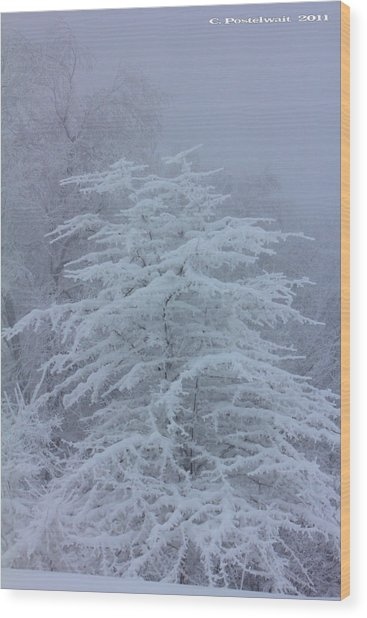 Snow Covered Tree In The Fog Wood Print