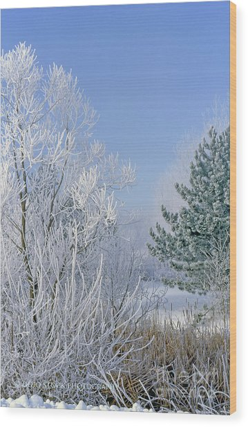 2a357 Snow Covered Trees At Alum Creek State Park Wood Print