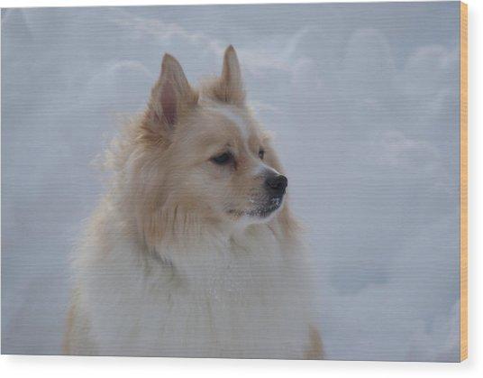 Snow Dog Wood Print by Heather Green