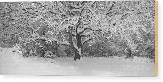 Snow Dusted Tree Wood Print