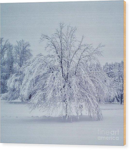 Snow Encrusted Tree Wood Print