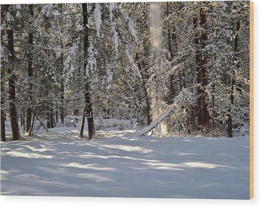 Snow Falling Off Cedars Wood Print