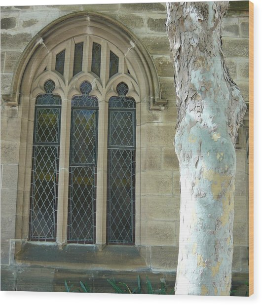 Snow Gum And St Andrews Cathedral Wood Print by Adrianne Wood