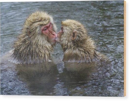 Snow Monkey Kisses Wood Print
