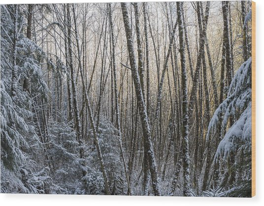 Snow On The Alders Wood Print