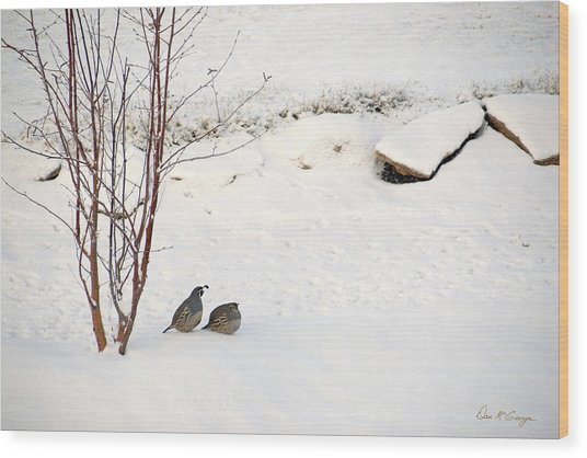 Snow Quail Wood Print