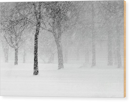 Snow Storm At Starved Rock Wood Print