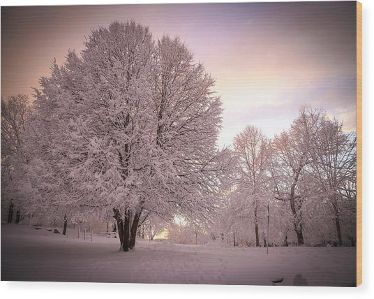 Snow Tree At Dusk Wood Print
