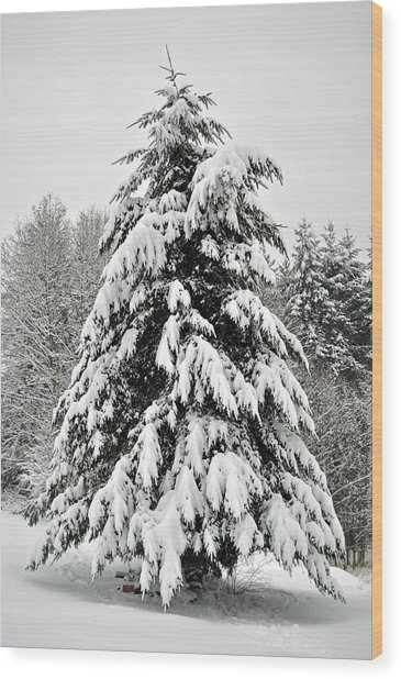 Snow Tree Wood Print by Matthew Adair